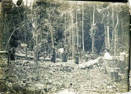 Exploitation du bois